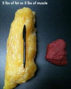 grasa vs musculo