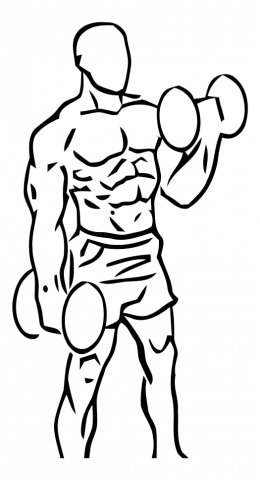 curl alterno biceps