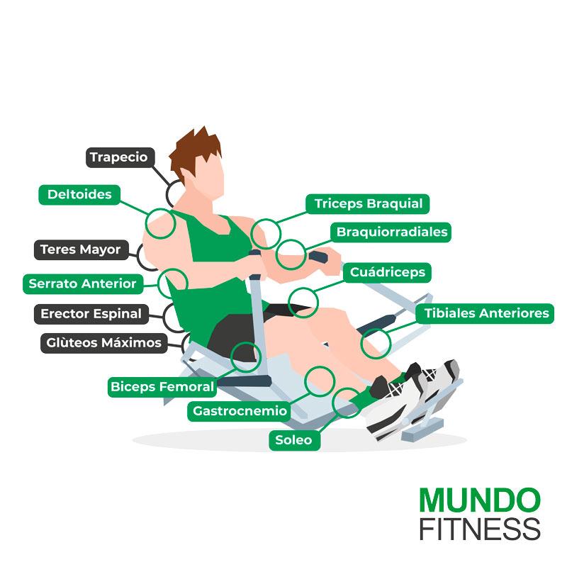 Beneficios del remo músculos ejercitados