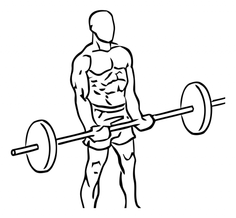 curl biceps barra recta