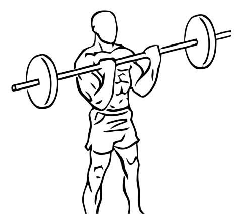 barra recta curl biceps