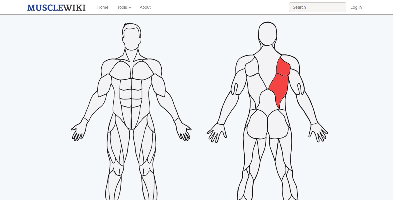 web muscle wiki