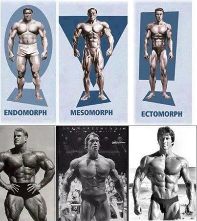 Ectomorfo, Mesomorfo, Endomorfo